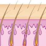 Hair shaft gets larger, is healthier and hair regrows.